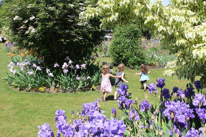 May Flowers: The Display Garden at Schreiner's IrisGardens