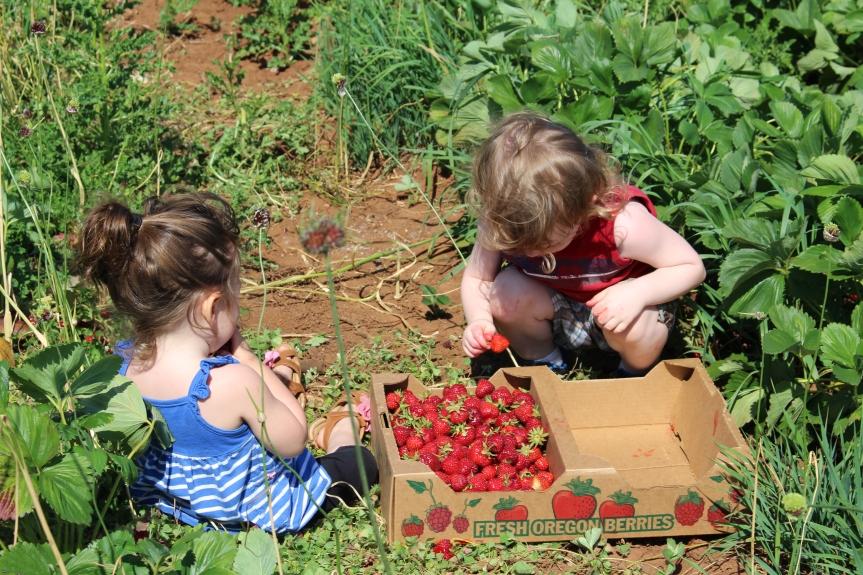 U-Pick Berry Picking: Stuart Olson Farms inSalem