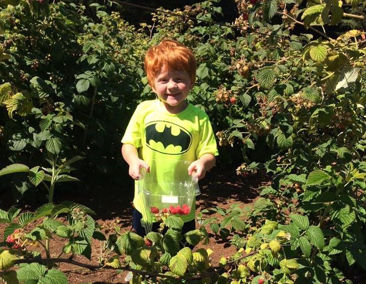 U-Pick Berries: Haven Hill Farm inSalem