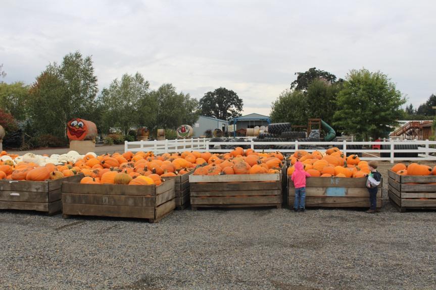 Day Trip: Bauman's Farm and Garden-Gervais