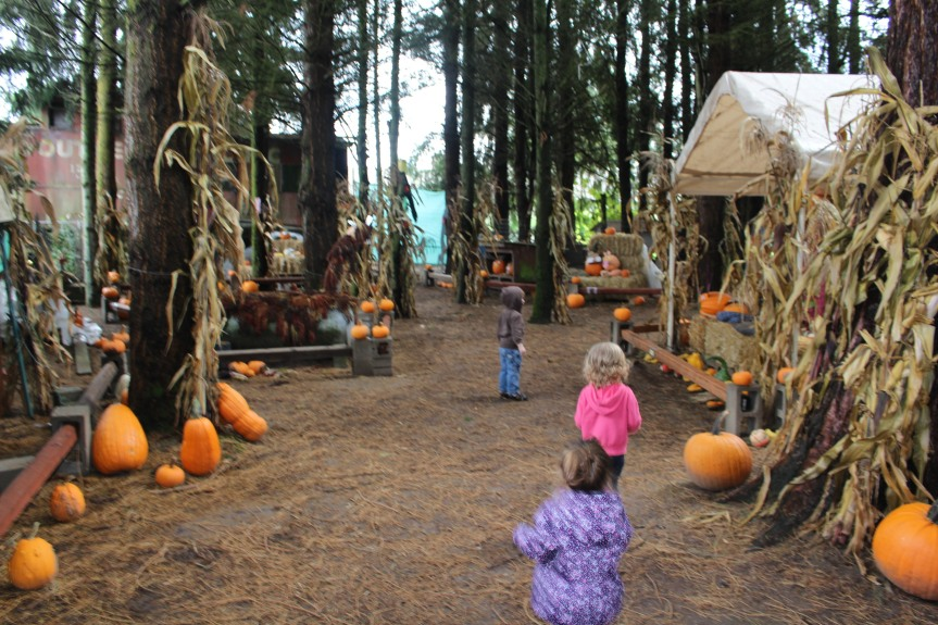 Pumpkin Patch Fun: Vince Woods Farm