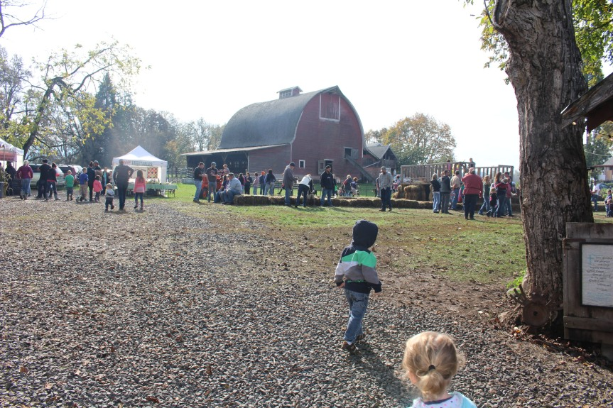 Day Trip: Northern Lights Tree Farm- Colonial Harvest Days in Pleasant Hill
